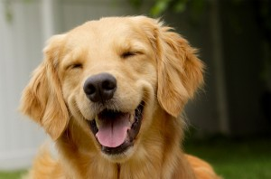 grinning_happy_dog